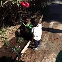 שותלים פרחים וצמחי תבלין - פעילות בעקבות הספר