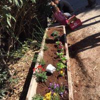 גינת פרחים ששתלו ילדי מעון גן ילדים בירושלים- פעילות בעקבות הספר